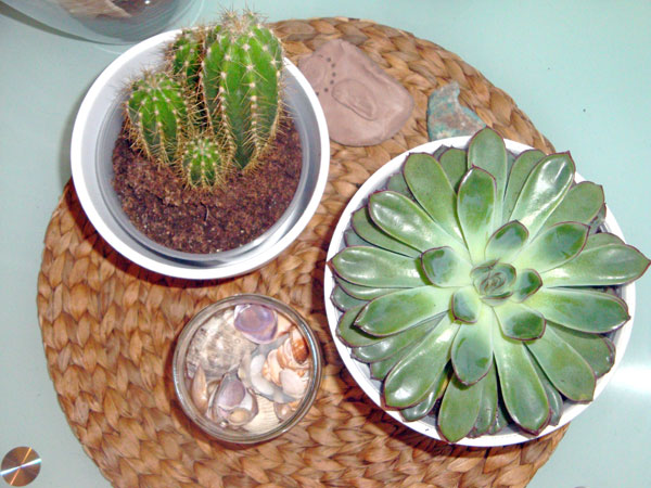 cactus-ikea