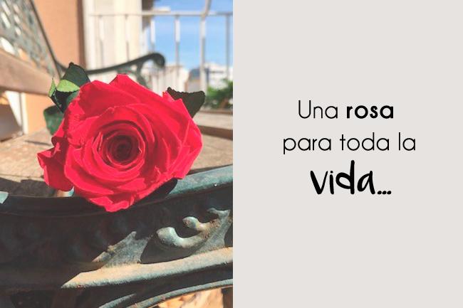 Una rosa para toda la vida…